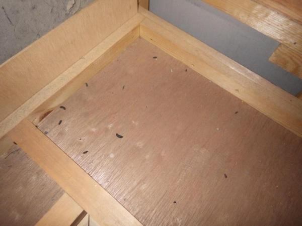 戸建住宅のネズミ駆除|京都市上京区 イメージ