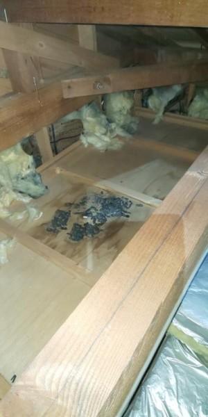 戸建て住宅の害獣駆除作業|京都市西京区 イメージ