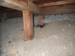 戸建て住宅のシロアリ駆除|京都市伏見区 イメージ