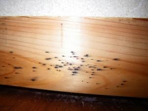 トコジラミ駆除 京都市 イメージ