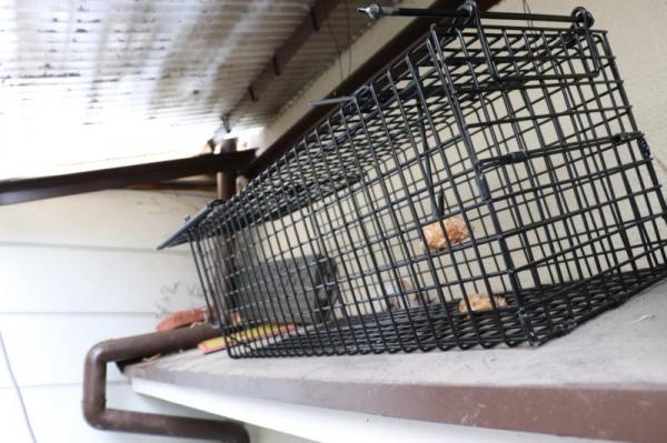 戸建て住宅の害獣捕獲作業|京都市北区スライダー2