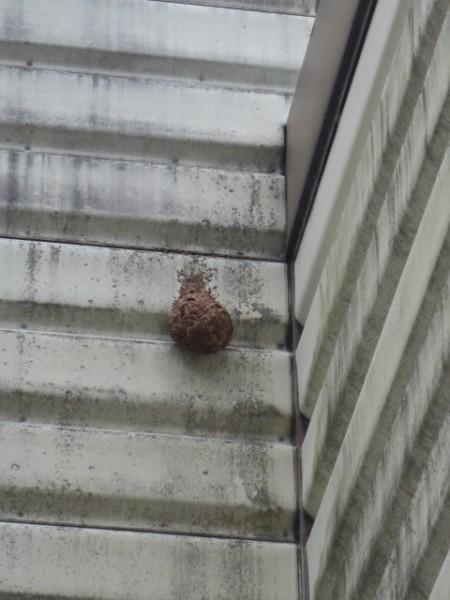 スズメバチの営巣除去作業|滋賀県栗東市 イメージ