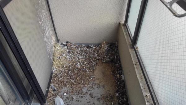 マンションの防鳥ネット設置工事|京都市山科区 イメージ
