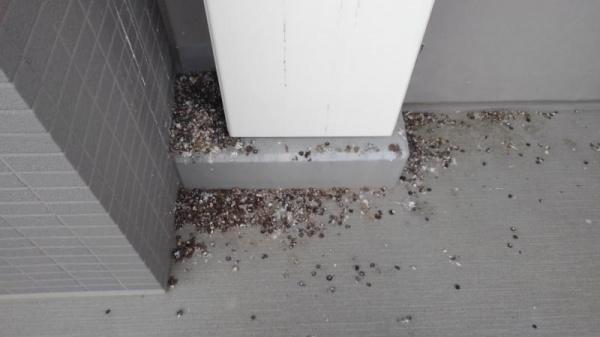 分譲マンションのハト糞清掃|京都府八幡市 イメージ