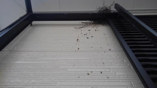 賃貸マンションの防鳥工事 京都市中京区 イメージ