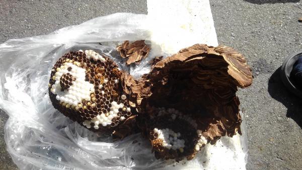 スズメバチの営巣除去作業|滋賀県栗東市スライダー2