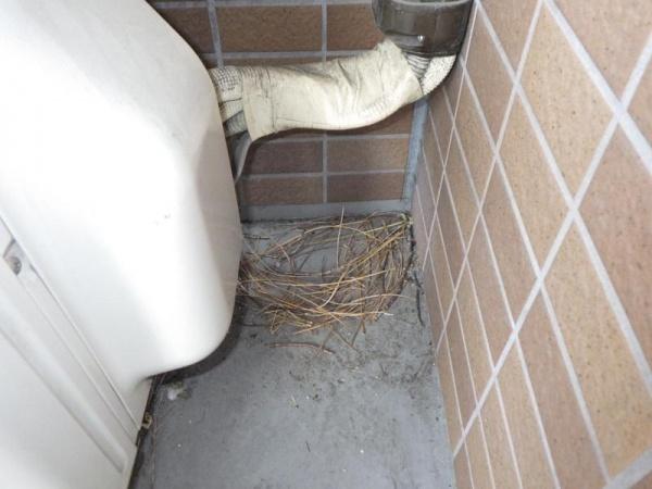集合住宅のバルコニー営巣撤去(鳩) 京都市下京区 イメージ