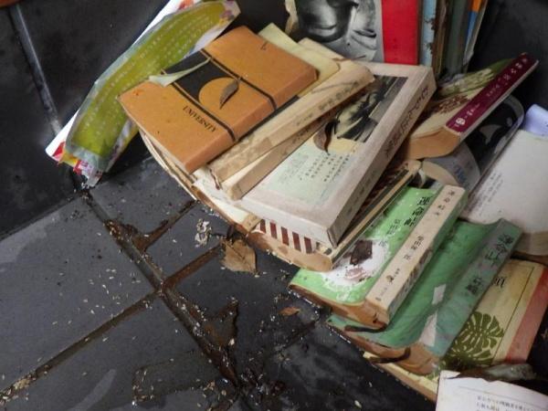 戸建て住宅の白蟻調査|京都市北区 イメージ