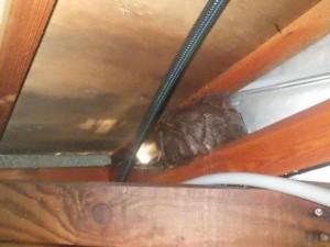 戸建住宅のスズメバチ駆除|京都市北区 イメージ