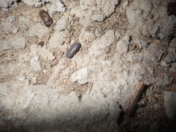 戸建住宅のゴキブリ対策|宇治市 イメージ
