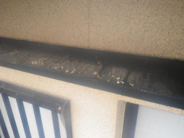 戸建住宅のハト対策 京都市伏見区 イメージ