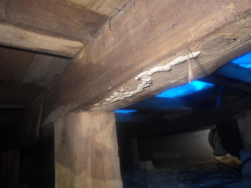 戸建て住宅の白蟻駆除作業|岡山県備前市 イメージ