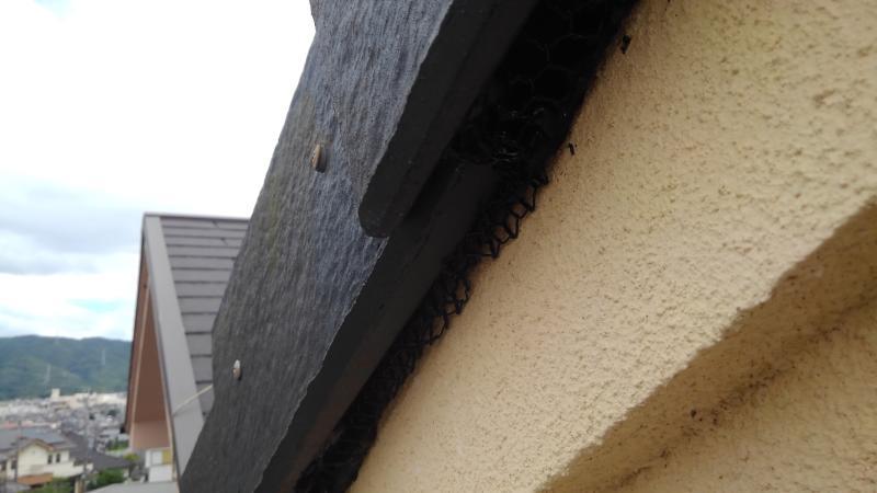 戸建住宅のコウモリ対策|亀岡市 イメージ