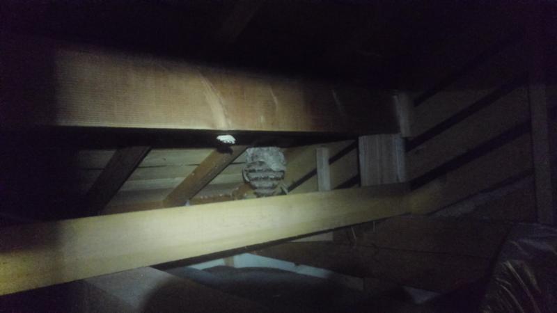 スズメバチの営巣除去作業|京都府亀岡市 イメージ